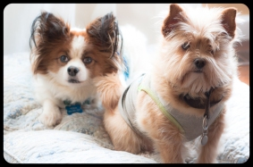 my little doggies… they so need a bath and haircut.