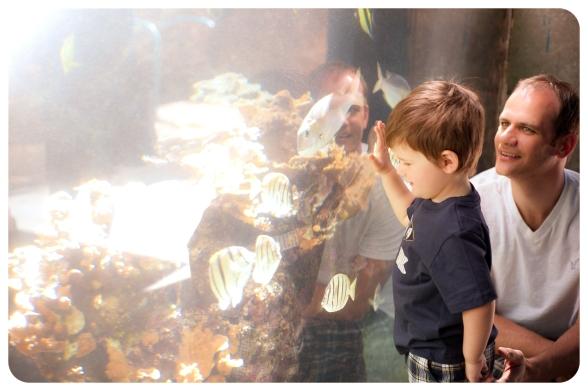 aquarium, nakalele, lahaina (117 of 147)