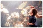 aquarium, nakalele, lahaina (120 of 147)