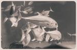 aquarium, nakalele, lahaina (136 of 147)