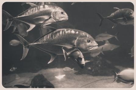 aquarium, nakalele, lahaina (138 of 147)